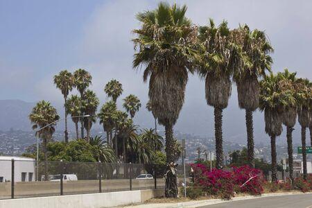 santa barbara: SANTA BARBARA, USA - AUG 15 2014: Plams tree and flowers in Santa Barbara, California, along the street
