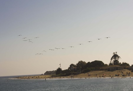 malibu: MALIBU, USA - AUG 16 2013: Flock of Pelican flying over the Malibu Coast at sunset in the summer