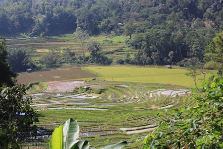 sulawesi: Paddy Field in Indonesia, the South Sulawesi region