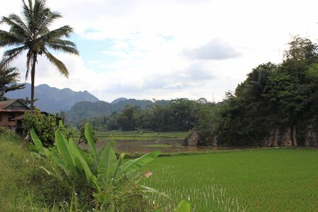 dull: Paddy Field in Indonesia, the South Sulawesi region, with mountains in the background, in a dull day