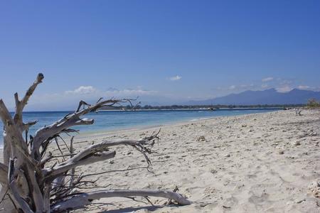 arena blanca: Driftwood on Gili Islands white sand beach in Indonesia Foto de archivo
