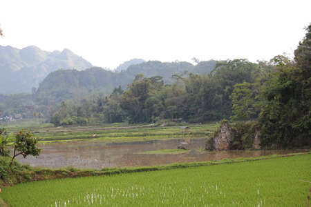 dull: Paddy Field in Indonesia, the South Sulawesi region, with mountains, in a dull day