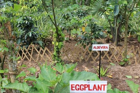 typology: Diferente tipolog�a de plantas en Indonesia