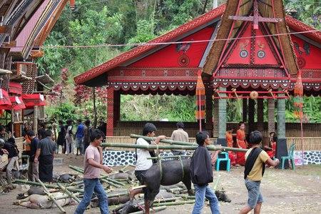 sacrifice: Tana Toraja, Indonesia - 03 de julio 2012: Grupo de Torajan alrededor de los cerdos utilizados como sacrificio para una ceremonia fúnebre en la región de Sulawesi de Indonesia, con la arquitectura típica tongkonan en el fondo Editorial