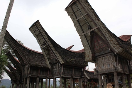 traditional house: PALAWA, INDONESIA - JULY 3 2012: typical Torajan ethnicity ancestral houses, called Tongkonan, in a dull day Editorial