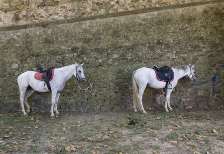 LASTRA A SIGNA, ITALY - AUGUSt 30 2015: two horses tied on a wall in Lastra a Signa, Italy