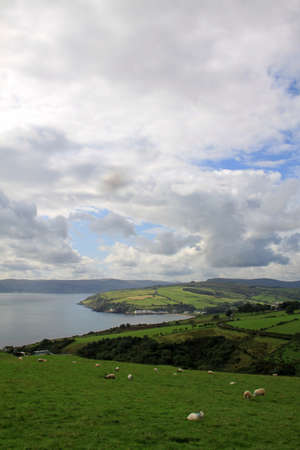 Landscape of hills with green fields and sheeps along Antrim Coast in Northern Ireland photo