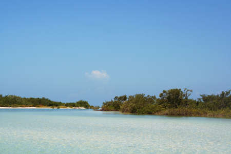 mangrove forest and lagoon in gulf of Mexico, Isla Holbox