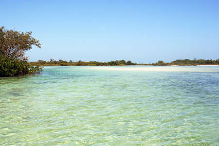gulf of mexico: mangrove forest and lagoon in gulf of Mexico, Isla Holbox