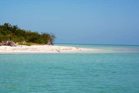 イスラ ホルボックス植生、メキシコ湾、ユカタン、メキシコ 写真素材