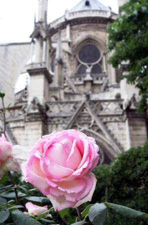sacre coeur: une rose à Notre-Dame cour