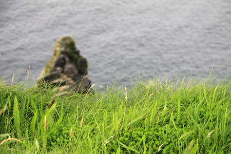 Green grass on the Cliffs of Moher, Ireland photo