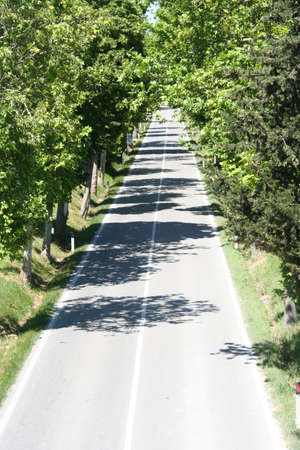 macerated: Road between the trees in italy Stock Photo