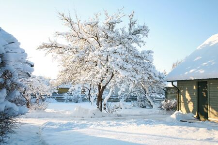 House and garden trees covered in snow on a cold, sunny winters day with clear, blue, azure skies Stock Photo
