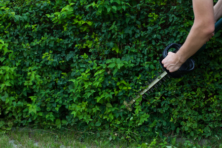 Man taming a hedge with an electric trimmer