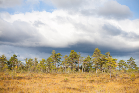Autumnal swamp wetland on a sunny day with fall storm clouds gathering in the background