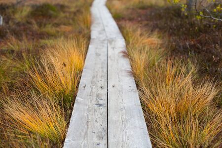 Closeup of a wooden boardwalk in an autumnal peatland with a shallow depth of field Banco de Imagens