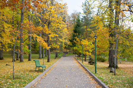 Autumnal park walkway with benches and lamp posts