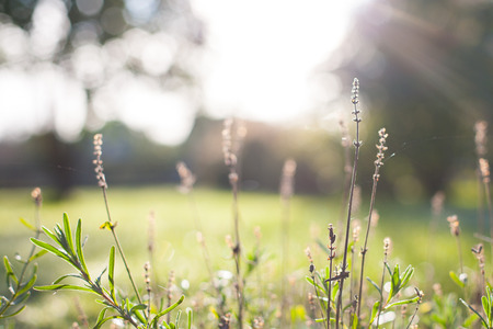 Closeup of grass and plants with a blurry bokeh autumn morning sunrise backdrop