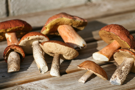 pristine: Wild mushrooms picked from a pristine forest