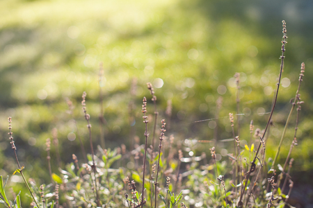 Closeup of meadow plants with a blurry, sunny, green grass bokeh background