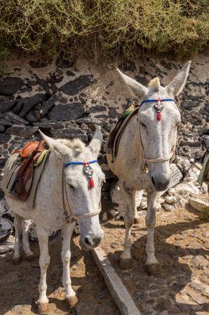 Donkey and Mule Path in Thira, Santorini, Greece Archivio Fotografico