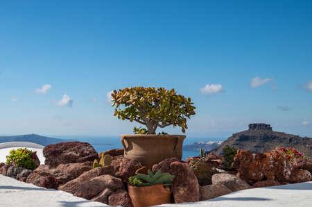 Mediterranean ornamental plants on the terraces of Oia, Santorini, Greece