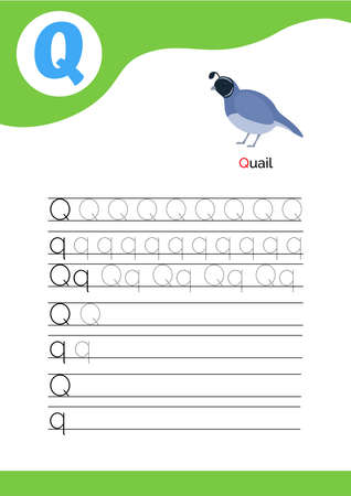 Letter Q with a picture of quail and seven lines of letter Q writing practice. Handwriting practice and alphabet learning. Vector illustration.