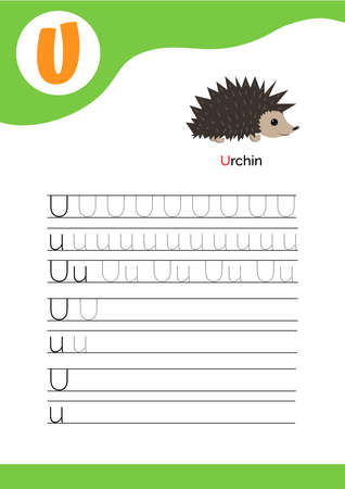 Letter U with a picture of urchin and seven lines of letter U writing practice. Handwriting practice and alphabet learning. Vector illustration.