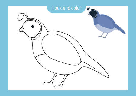 Look and color. Coloring page outline of quail with colored example. Vector illustration, coloring book for kids preschool activities. 矢量图像