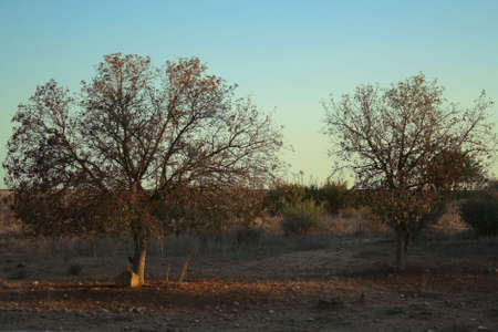dry trees Stock Photo - 3739089