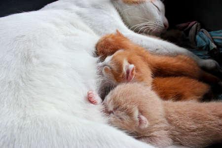 Cat mother feeds kitten