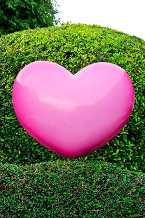 pink heart: Pink heart on garden background Stock Photo