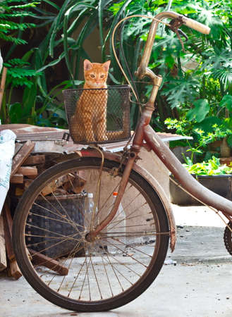 Old bike with cat photo