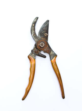 Old garden secateurs for cutting branches  on white background photo