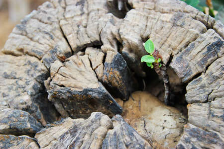 reborn: young plant reborn on tree stub