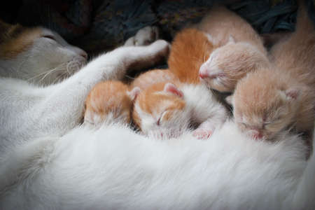 mother cat with kittens sleeping photo