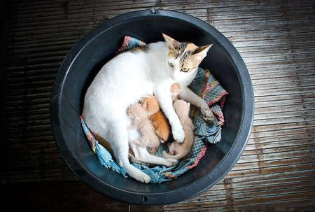Mummy cat and kitten  Cat family members  photo
