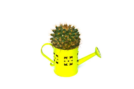 watering pot: Cactus in watering pot on white background