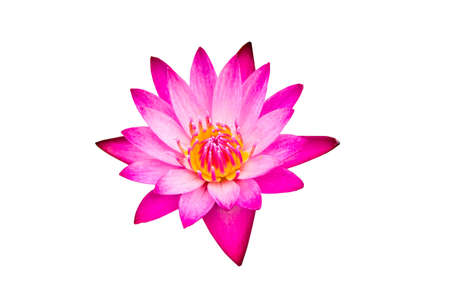 lotus flower: A beautiful pink waterlily or lotus flower on white background. Stock Photo