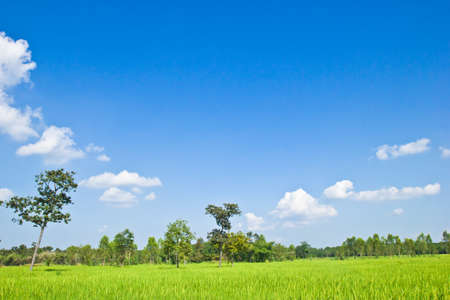 Green field and tree with blue sky.