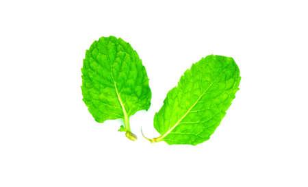 Fresh mint leaves on white background.