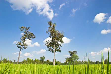 Green field and tree Imagens