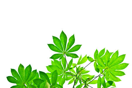 Leaf on white background. Imagens