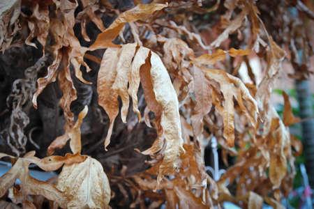 dry leaf on tree Imagens