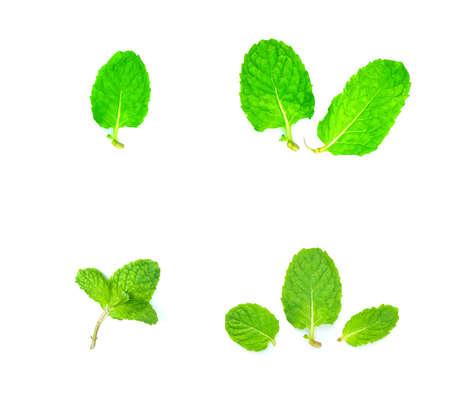 Fresh mint leafs on white background.