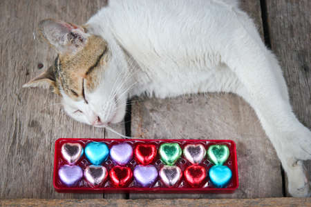sleeping cat  with chocolate hearts candys.