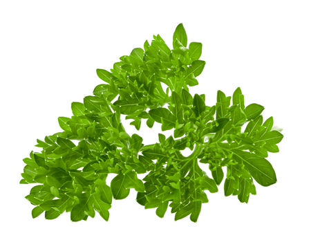 parsley isolated on white background, full depth of field