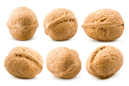 walnut, nut, isolated on white background, clipping path, full depth of field Imagens
