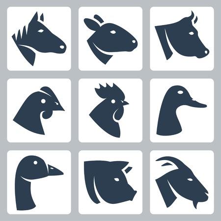 飼いならされた動物アイコンを設定する馬、羊、牛、鶏、鶏、アヒル、ガチョウ、豚、ヤギ  イラスト・ベクター素材